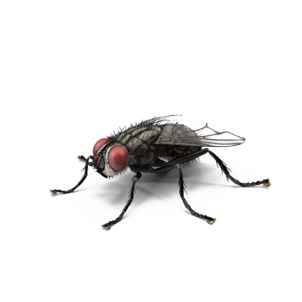 Fly PNG Transparent Photo
