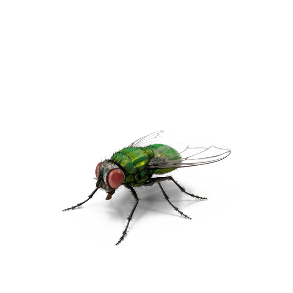 Green Fly PNG Transparent File