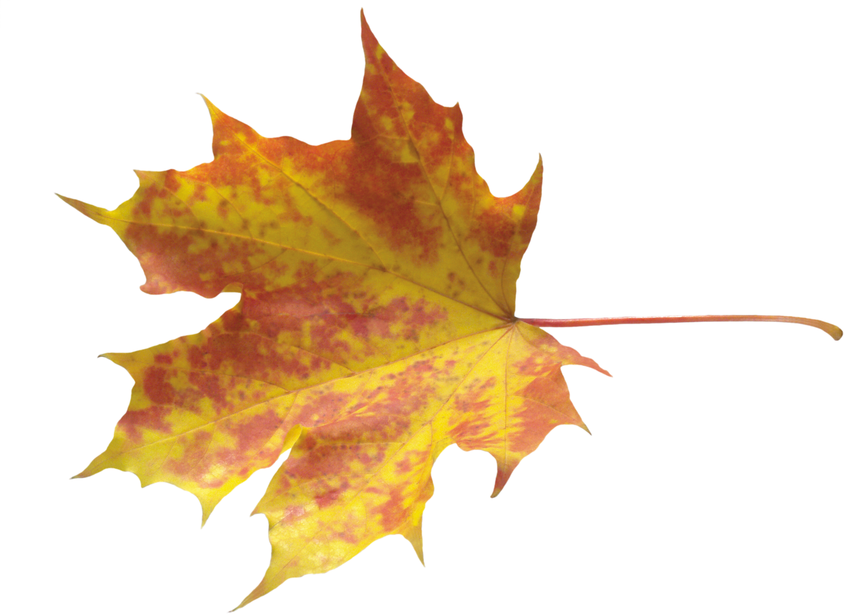 Autumn Leaves PNG Photo Image