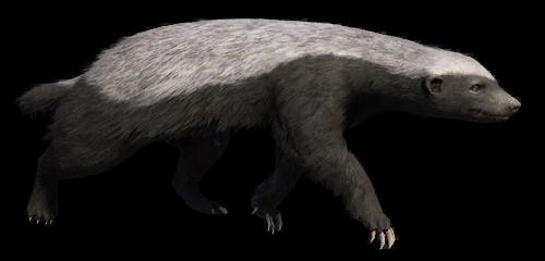 Badger Crawling PNG