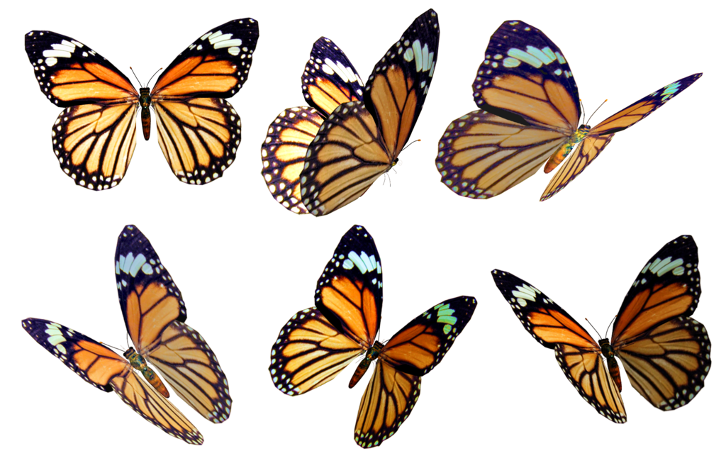 Butterflies Background PNG Image