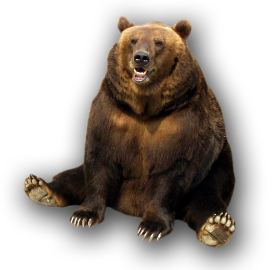 Grizzly Bear Transparent Free PNG